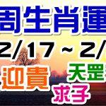 2020生肖運勢週報|02/17-02/23|金玲老師(有字幕)